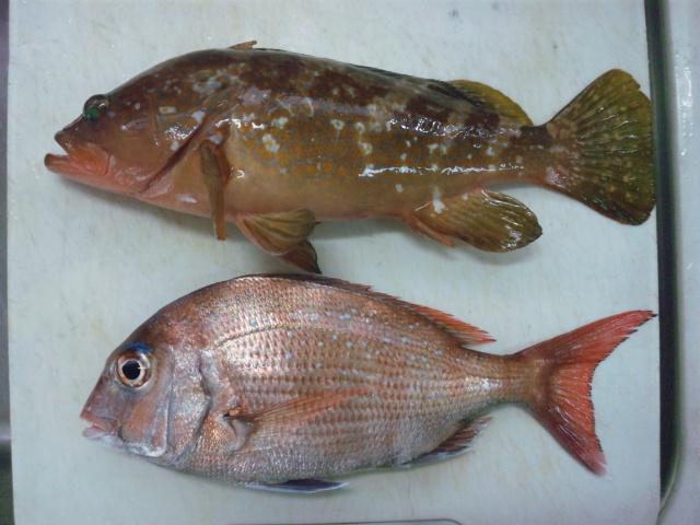 美味しい魚120603