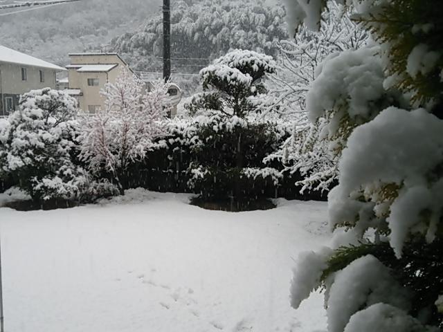 大雪140208