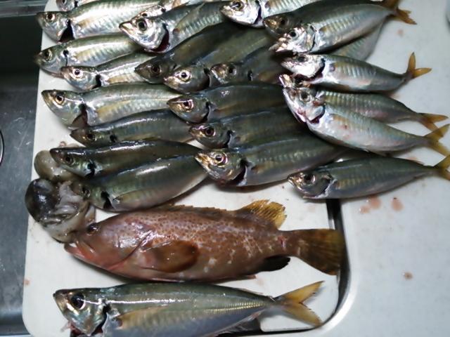 美味しい魚を求めて 141026