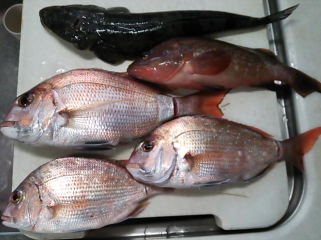 釣り納め&初釣り150103